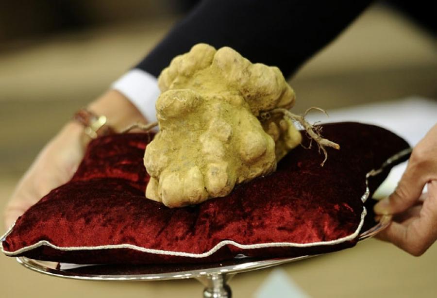 """Вінницький фермер ділиться секретами вирощування грибів-""""аристократів"""""""