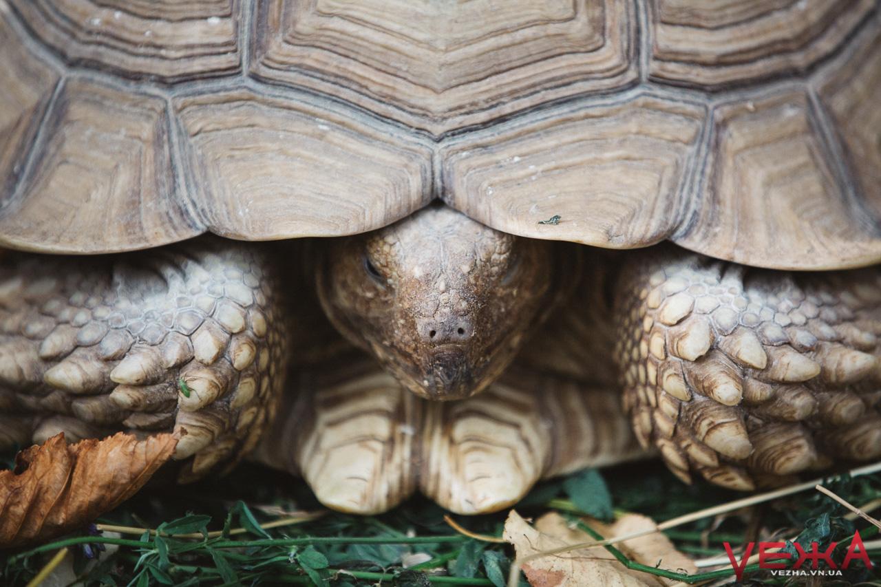 У Вінницькому парку до єнотів і носух приєднались африканські черепахи. ФОТОРЕПОРТАЖ