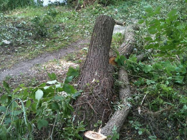 На пляжі «Центральний» незаконно зрубали 20 дерев