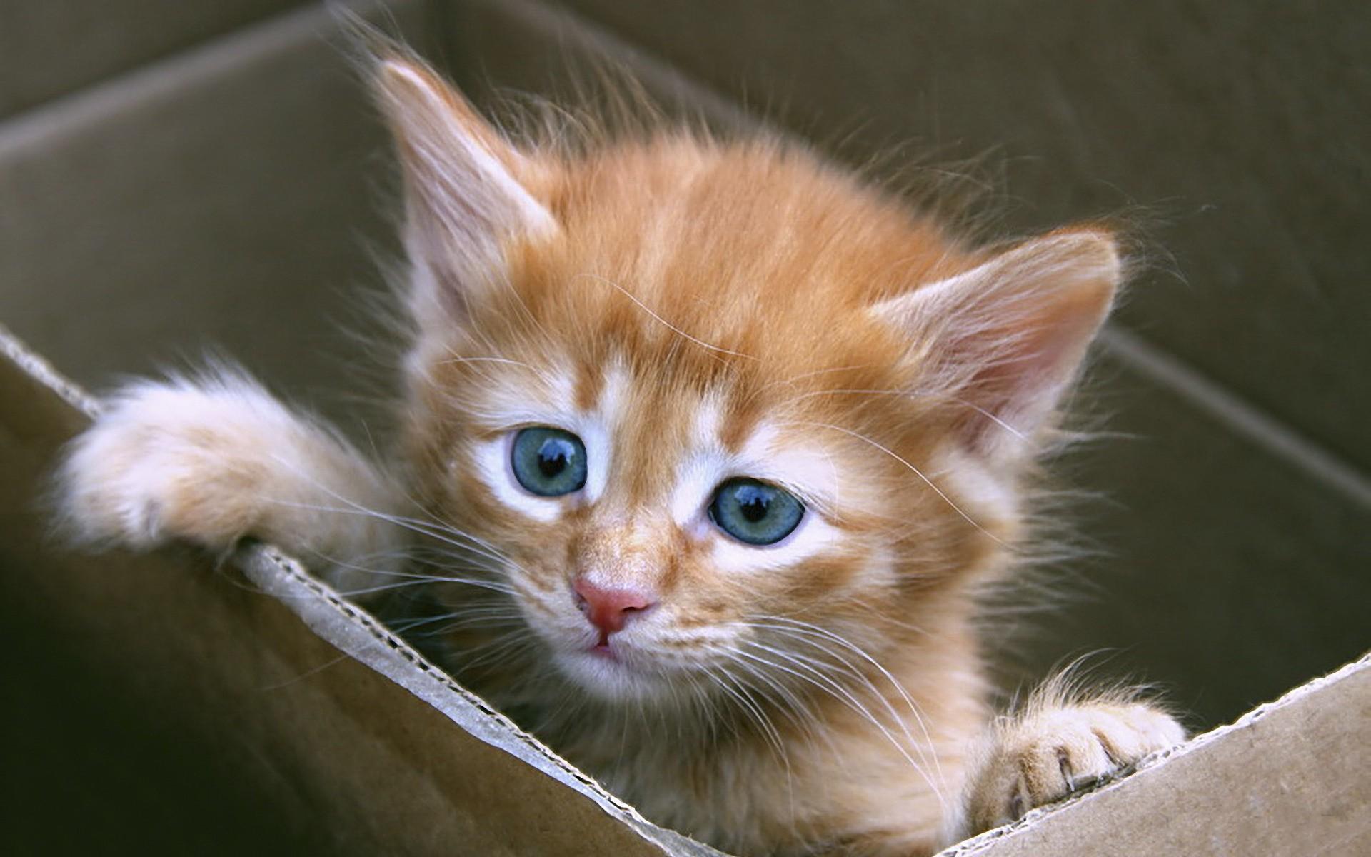 У жовтні вінницькі студенти-медики запустять платформу з пошуку притулків для тварин
