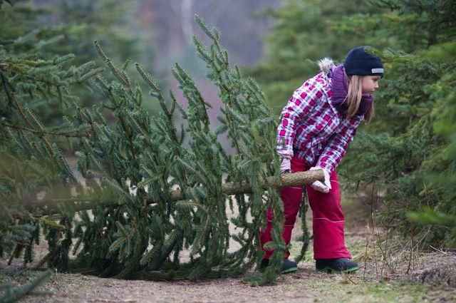 Свята завершуються: куди подіти ялинку після Різдва у Вінниці?