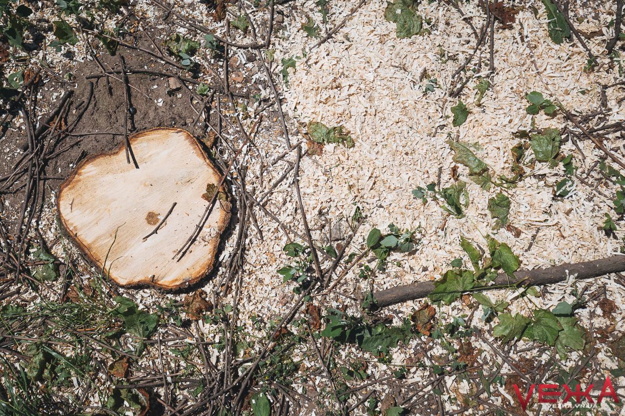 У Вінниці обріжуть дерев на понад мільйон гривень