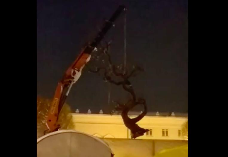 """Як на вінницький майдан привезли """"Дерево Свободи"""". ВІДЕО"""