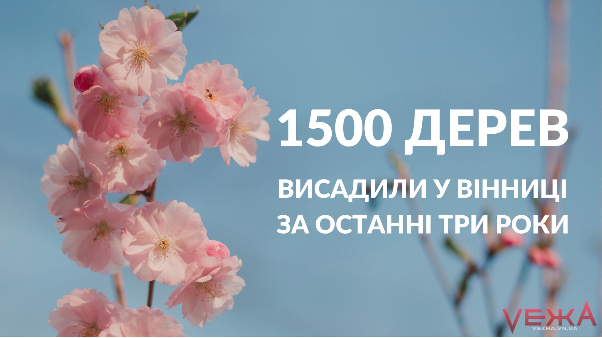 За останні три роки у Вінниці висадили майже півтори тисячі дерев