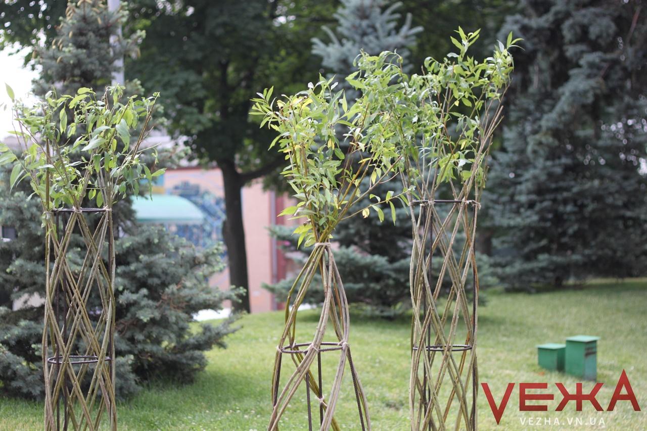 У центрі Вінниці висадили плакучі верби із переплетеними стовбурами. ВІДЕО