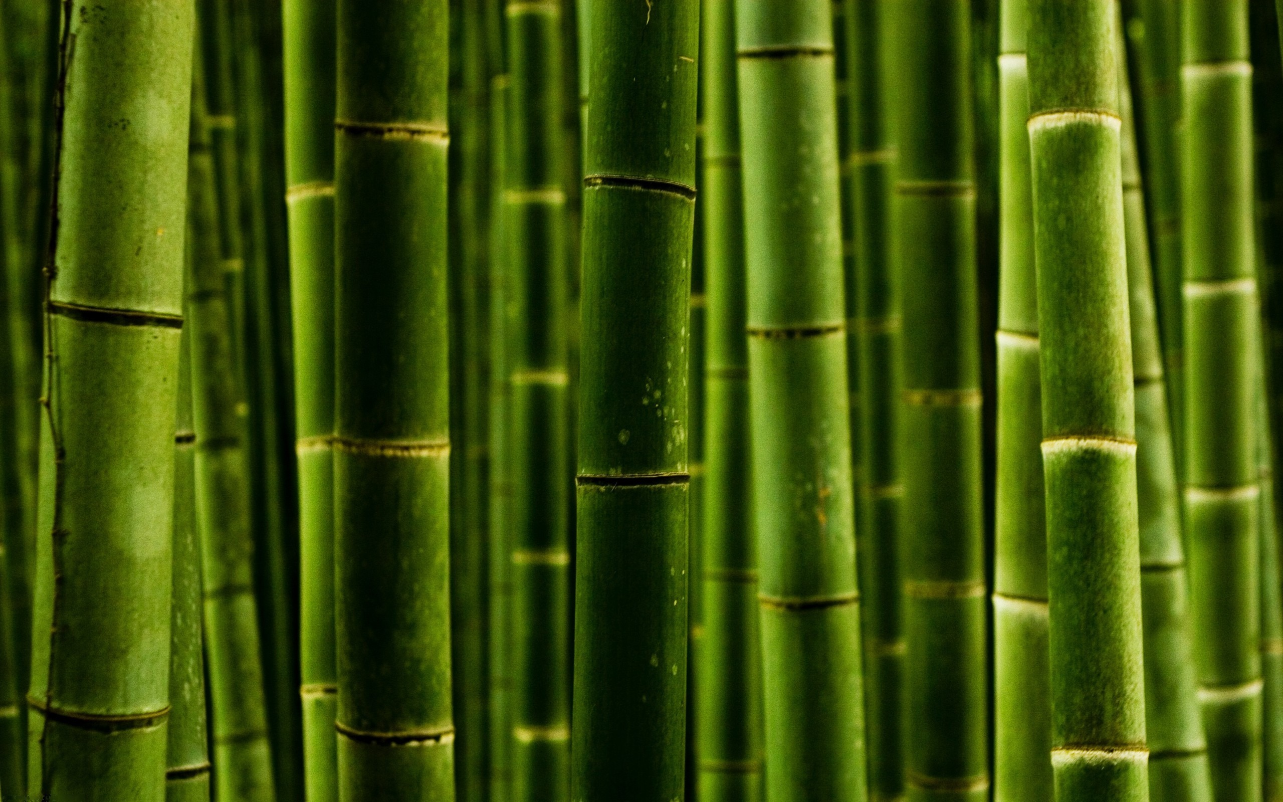 Агро стартапи Вінниччини: вирощування бамбуку, фундуковий сад та крафтова броварня