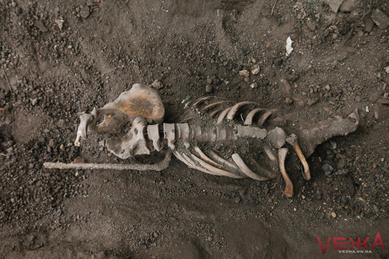 Під час розкопок на території Мурів у Вінниці археологи знайшли скелет людини. ФОТОРЕПОРТАЖ