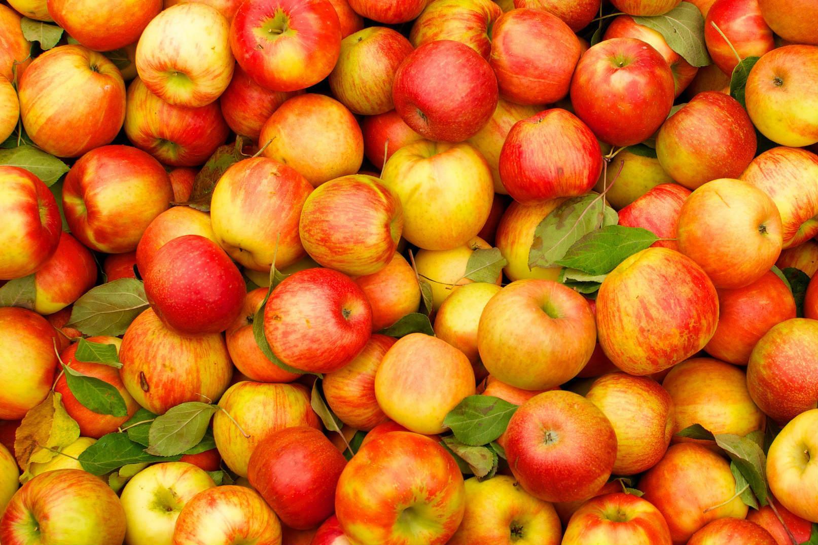 """Пілінг яблучною масою і ванна з соком: на Вінниччині реалізують проект """"Яблуневий шлях"""""""