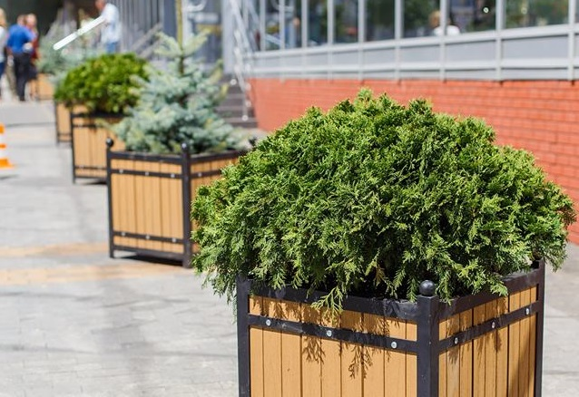 Вічнозелена Вінниця: у місті почали встановлювати кашпо з ялинками та туями. ФОТО