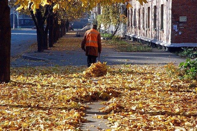 Вінничанка просить вивезти опале листя з приватного сектору. ПЕТИЦІЯ