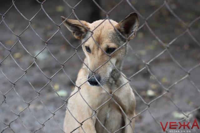 На Вінниччині – вісім проваджень за жорстоке поводження з тваринами