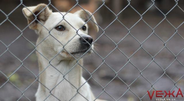 Худі, товсті та більшість самок: скільки у Вінниці безпритульних собак і як їх ловитимуть. ГРАФІКА