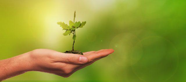Протягом осені у Вінниці висадять тисячу нових дерев. ФОТО