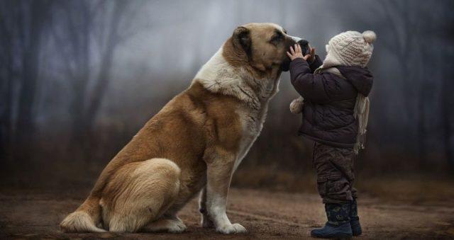 За рік у Вінниці знайшли господарів майже сотня собак з притулку. ВІДЕО