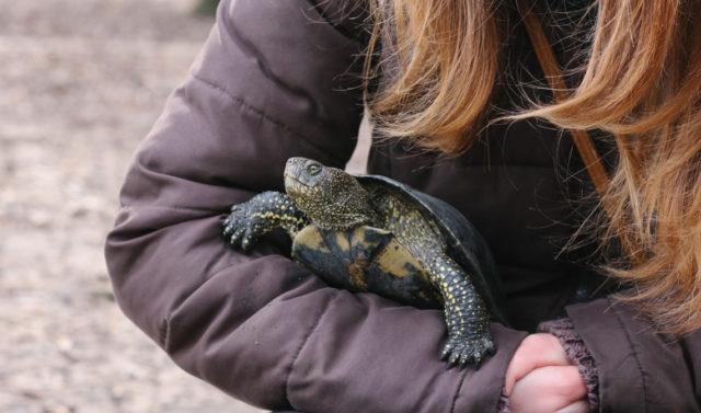 Як двоє вінничан врятували покинутих черепах з озера в Центральному парку. ФОТОРЕПОРТАЖ
