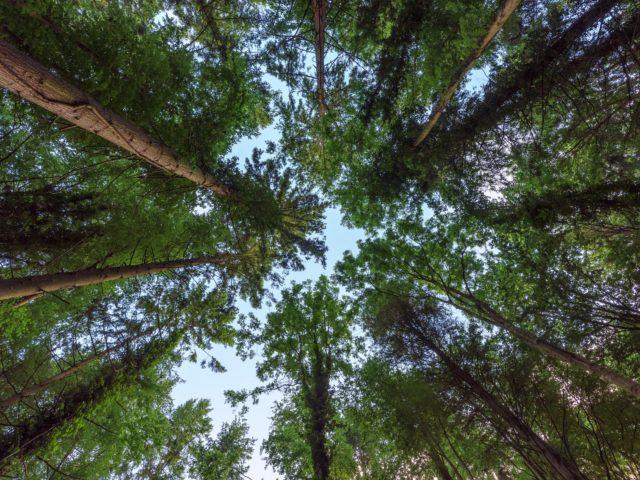 На Вінниччині минулого року відтворили 1143 гектарів лісу