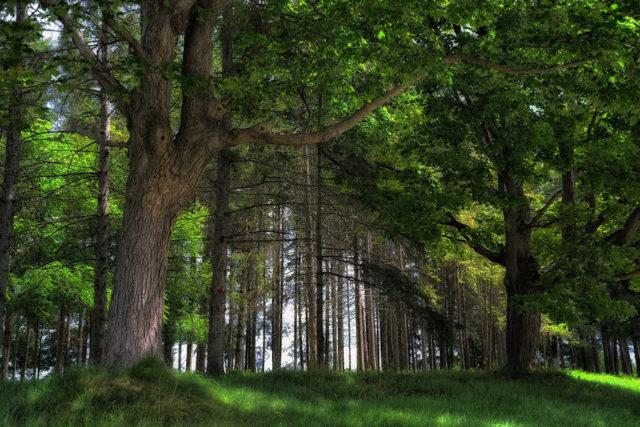 На Вінниччині планують відтворити ще 1010 гектарів лісів
