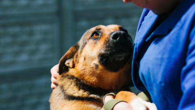 У пошуках дому: історії собак з вінницького притулку, які чекають нових господарів. ФОТОРЕПОРТАЖ