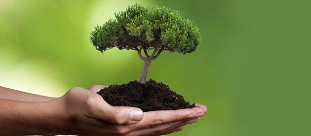 У парку Ющенка планують висадити понад 700 дерев і кличуть вінничан на допомогу