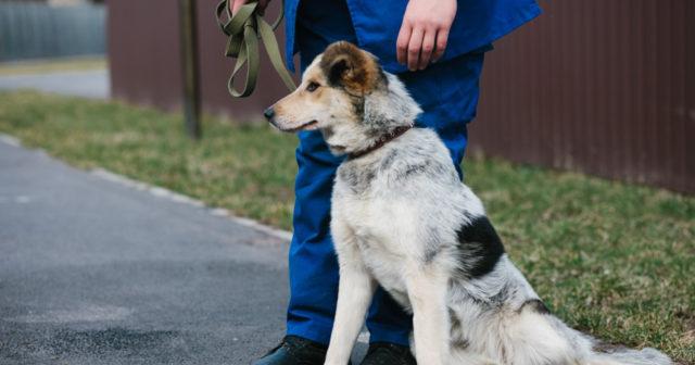 Вінничани просять облаштувати цивілізовану територію для вигулу собак. ПЕТИЦІЯ