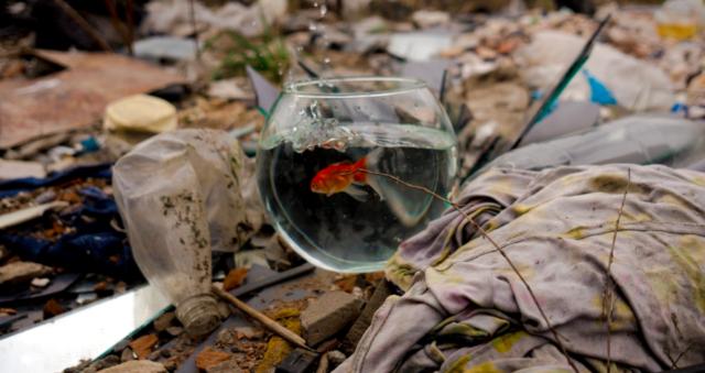 Обличчя людства: у Вінниці відбудеться екологічно-мистецький перформанс