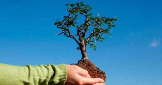 Клени, липи та гіркокаштани: у Вінниці висадять тисячу нових дерев