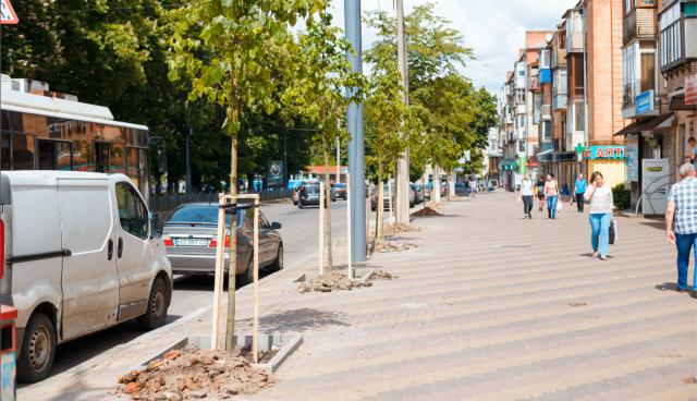 На Пирогова та Привокзальній почали висаджувати нові дерева. ФОТО