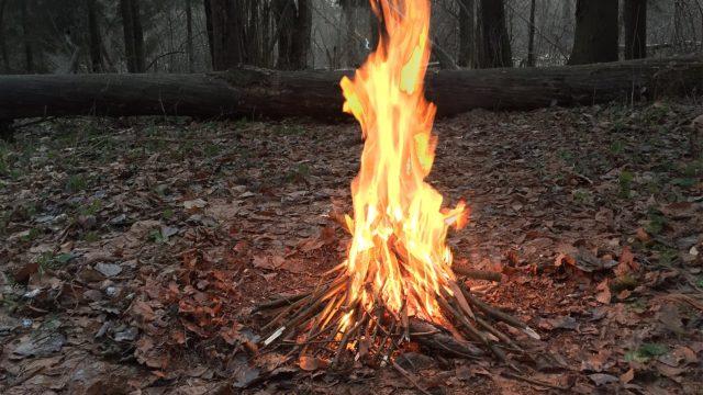 Вінничани просять створити територію без вогнищ в Лісопарку