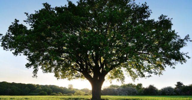 Дерева замість кульок: вінницька школярка ініціювала еко-акцію. ВІДЕО