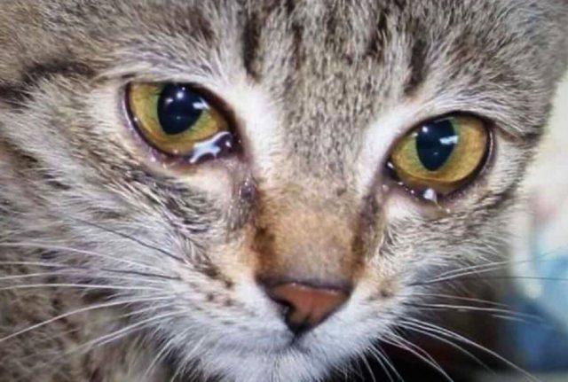 Вінничанина, який убив власну кішку, засудили до п'яти років позбавлення волі