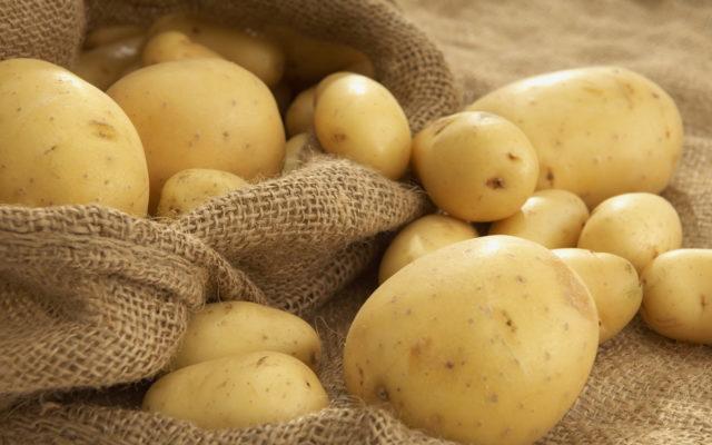 Школярі Бершадського району зібрали понад три тонни картоплі на благодійність. ФОТО