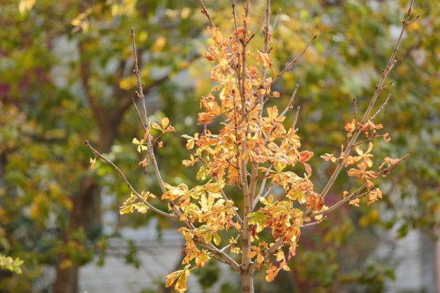Восени у Вінниці висадять тисячу дерев у дворах будинків. ФОТО