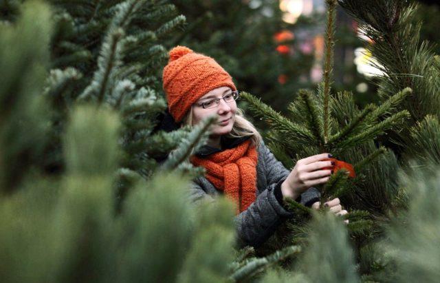 """Лісівники Вінниччини закликають """"бути еко"""" та купувати на Новий рік живі ялинки"""