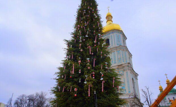 Для головної новорічної ялинки у Києві обрали дерева з Вінниччини