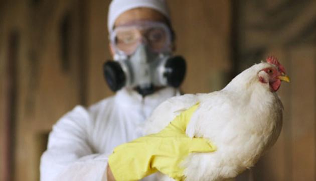Білорусь заборонила ввозити м'ясо птиці з Вінниччини