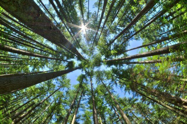 Цьогоріч на Вінниччині відтворять понад 1000 гектарів лісів
