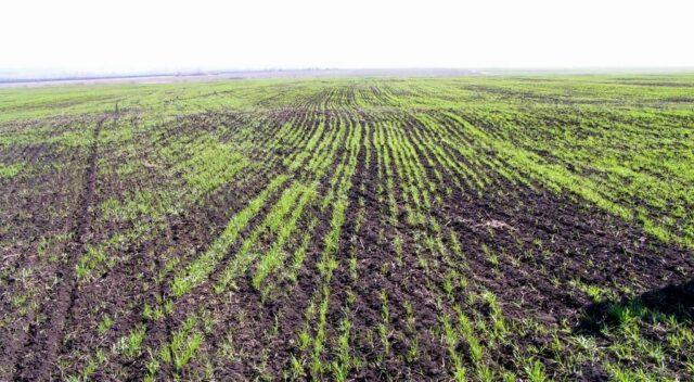 На Вінниччині через теплу зиму посівна кампанія розпочнеться раніше. ВІДЕО