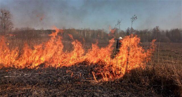 На Вінниччині за добу вигоріло 10 гектарів сухого настилу