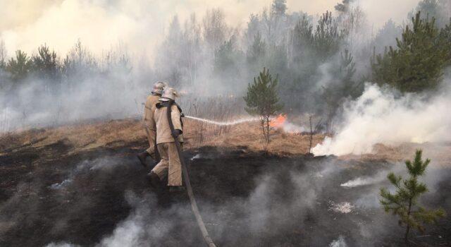 Вінницькі рятувальники поїхали гасити лісові пожежі у зоні відчуження на Київщині. ФОТО, ВІДЕО