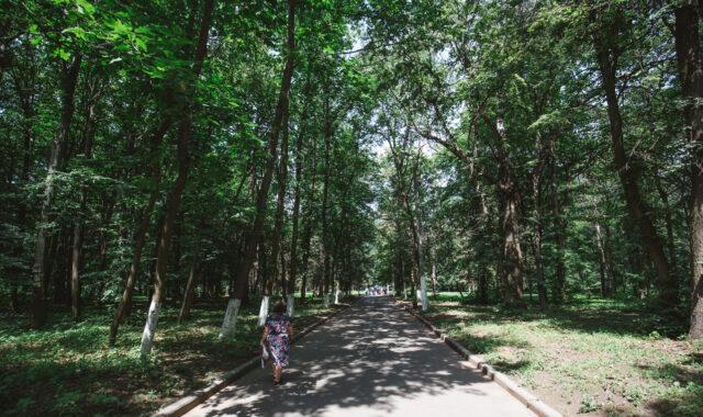 У Вінниці пропонують привести до ладу парк біля лікарні Ющенка та висадити нові дерева