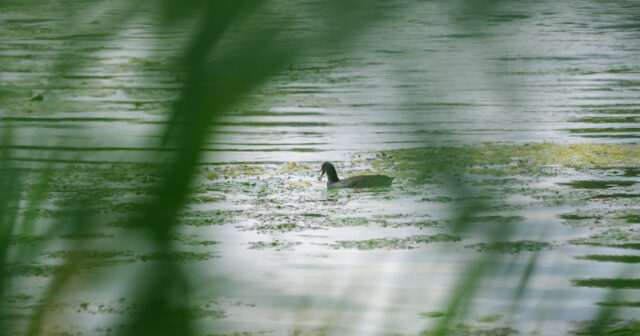 Екологічна інспекція: концентрація забруднюючих речовин у Південному Бузі перебуває в межах норми