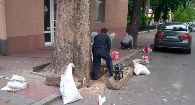 """Врятувати дерево """"від ідіотизму"""": як урбаніст та Муніципальна варта припинили знищення дерева в центрі Вінниці. ФОТО"""