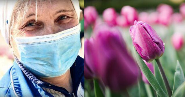 Франя і тюльпани: як вінницька бригада комунальників висадила сорок тисяч квіток. ВІДЕО
