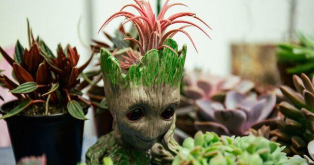 Хижі та ті, що ростуть у повітрі: у Вінниці відкрилась виставка незвичайних рослин. ФОТОРЕПОРТАЖ