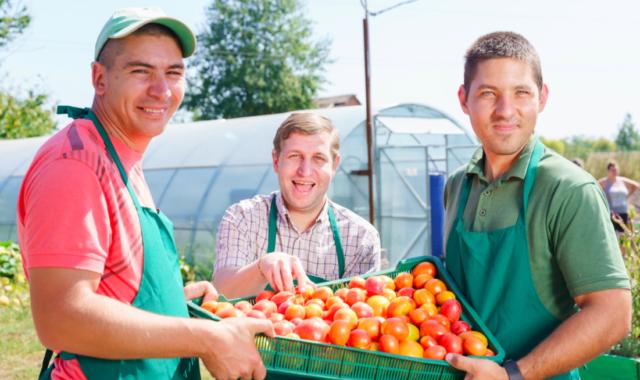 Тепличне господарство на Вінниччині: молоді люди з інвалідністю вирощують квіти, зелень, пряні трави, овочі та розсаду