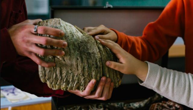 Зуб мамонта, знайдений на Вінниччині, передали до краєзнавчого музею. ФОТО
