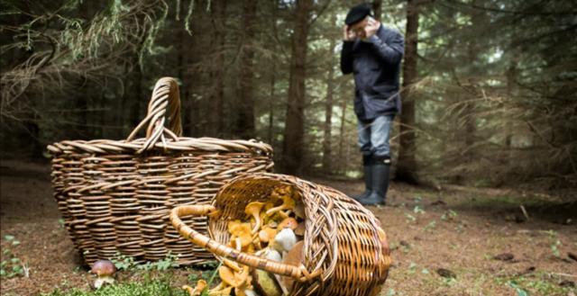 На Вінниччині за останній тиждень 28 людей отруїлись грибами