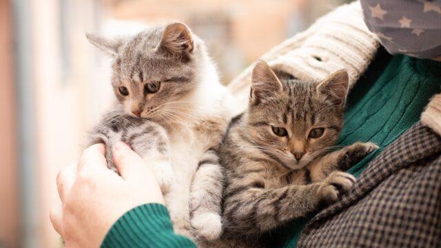 Чотирилапі друзі з «приданим»: у Вінниці шукають господарів кошенятам з музею. ФОТОРЕПОРТАЖ