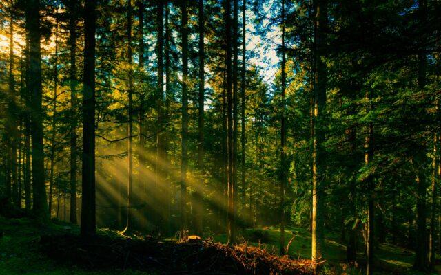 На Вінниччині понад 200 гектарів лісу повернули у комунальну власність
