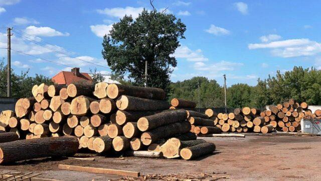 На Вінниччині судитимуть лісничих за незаконну вирубку дерев цінних порід. ФОТО, ВІДЕО